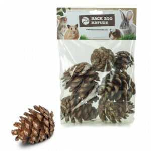 back-zoo-nature-forest-pine-cones-for-rodents